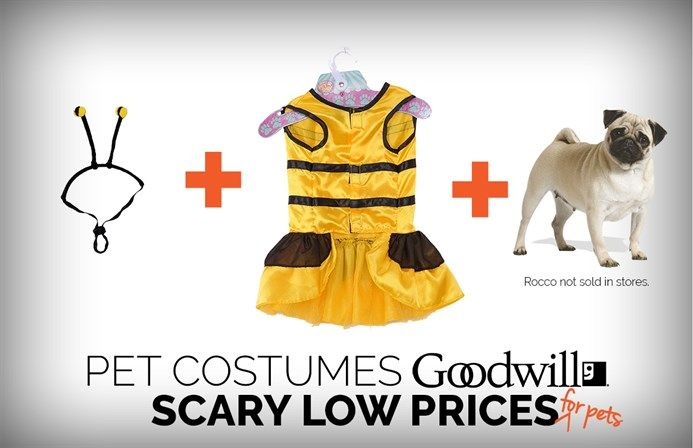 Halloween Costumes to Get You Inspired NonProfit