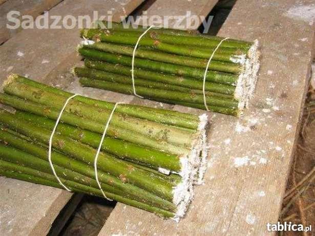 Zywoplot Tani Plot Z Wierzby Wierzba Energetyczna Miescisko Image 2 Asparagus Vegetables