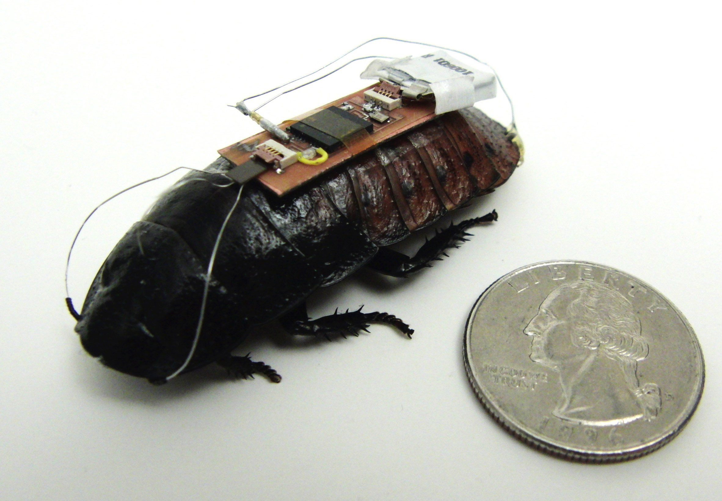 Cyborg insects map out disaster zones