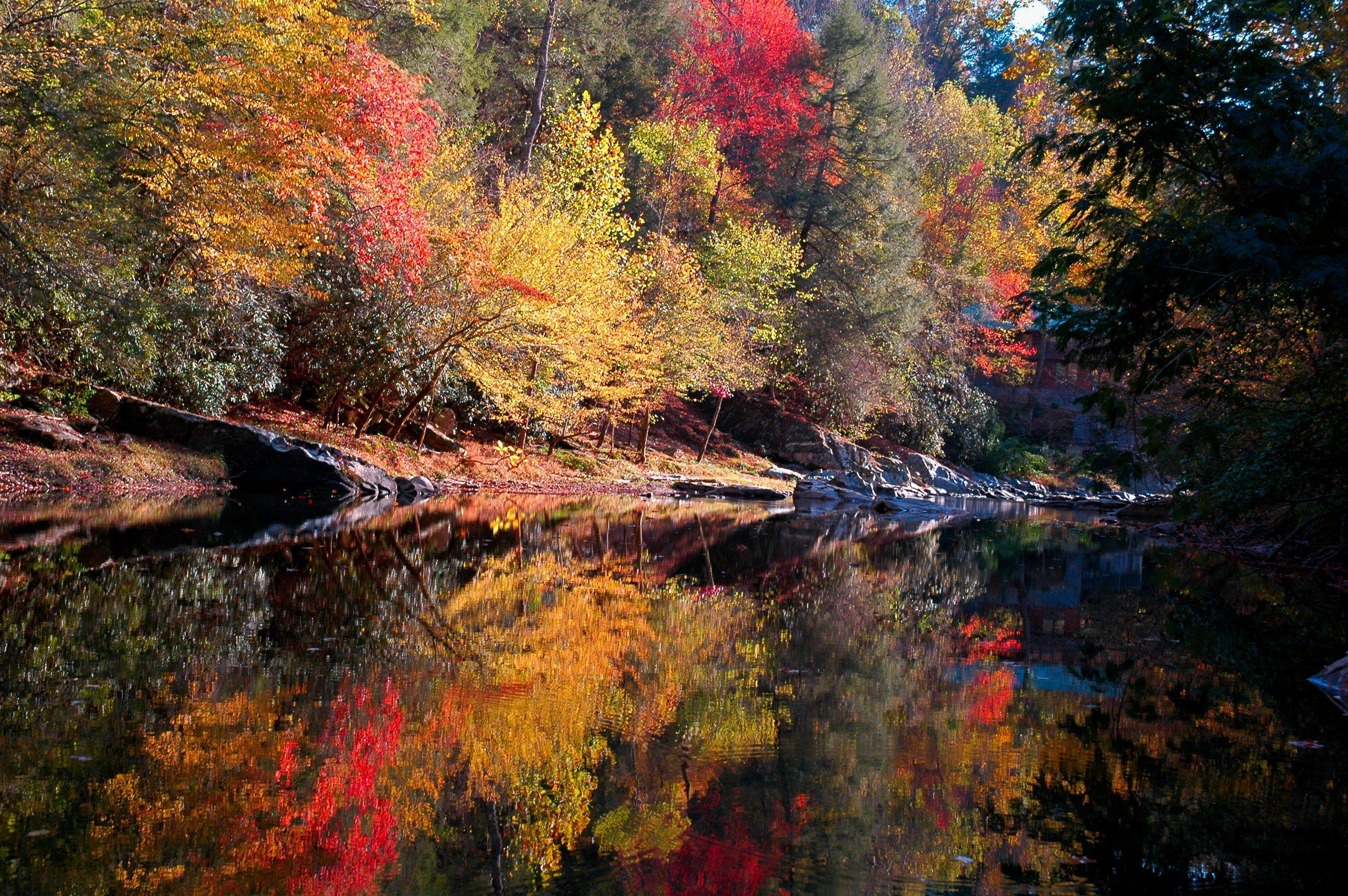 american river raft rentals coupons
