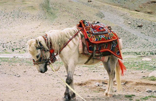 Tibetan transport.