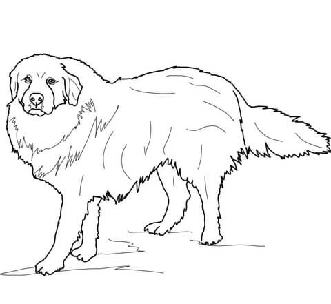 Great Pyrenees Coloring Page Dog Coloring Page Horse Coloring
