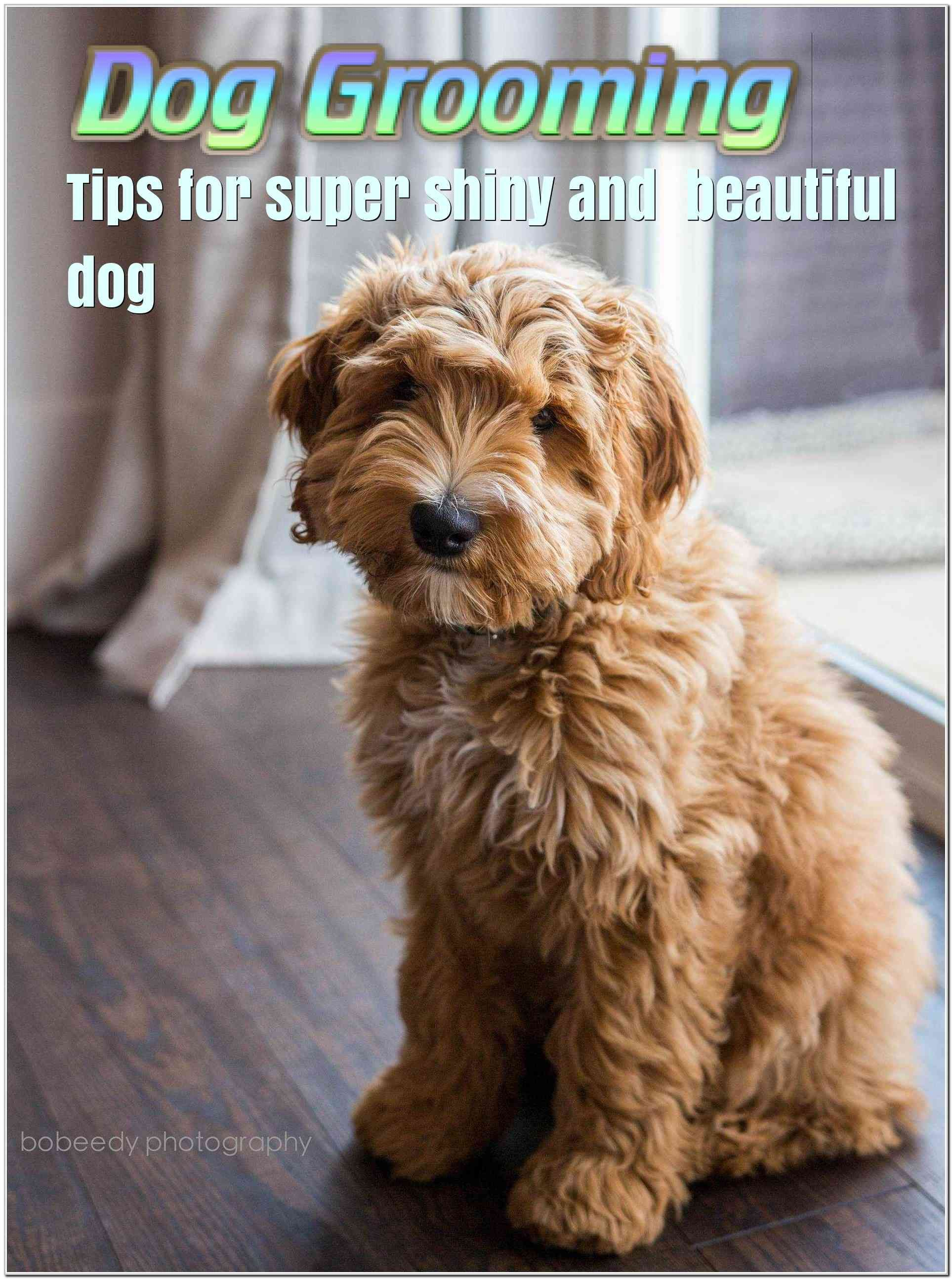 Use These Dog Grooming Ideas For A Bouncing, Happy Dog