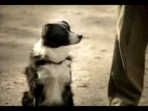 One of the funniest budweiser commercial the best media budweiser dog commercial so funny mozeypictures Choice Image