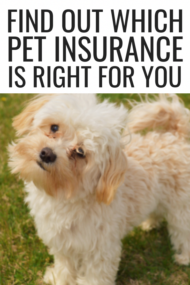 Find Out Which Pet Insurance Is Right For You Dog Wellness Pet