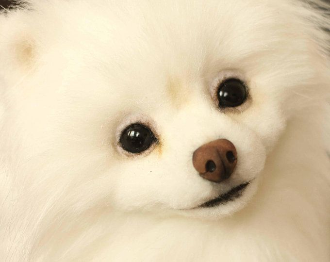New Totally Free dogs and puppies pomeranian Ideas  Do you like your canine? Cer... ,  #canine #Cer #dogs #dogsandpuppiespomeranian #Free #ideas #Pomeranian #Puppies #Totally