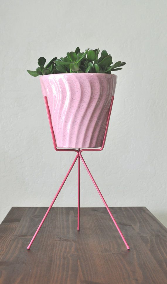 Pin On Indoors: Pin On Indoor Gardening & House Plants