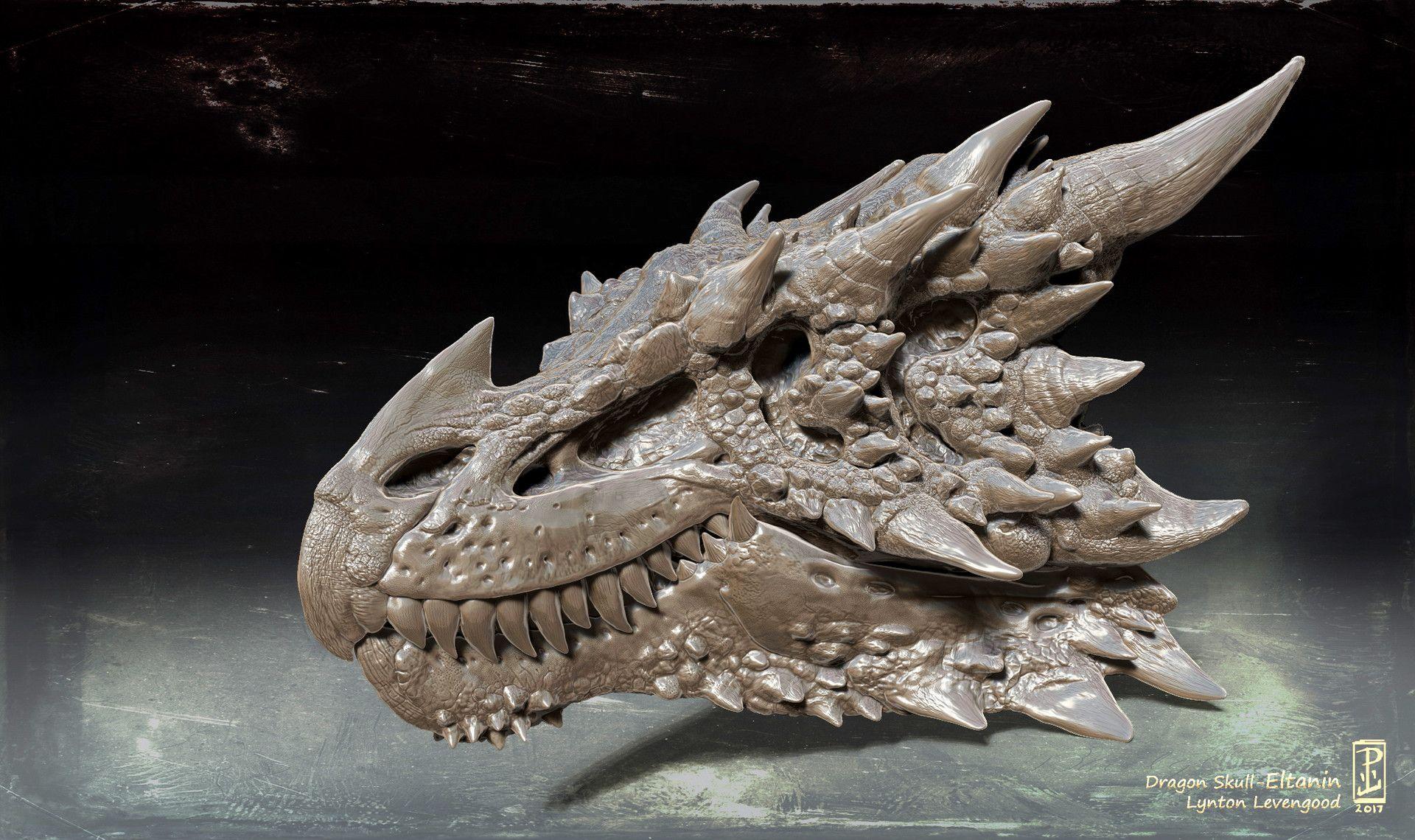 Artstation Dragon Skull Eltanin Lynton Levengood Dragon Bones Dragon Tattoo Drawing Dragon Skeleton Great savings & free delivery / collection on many items. dragon skull eltanin lynton levengood