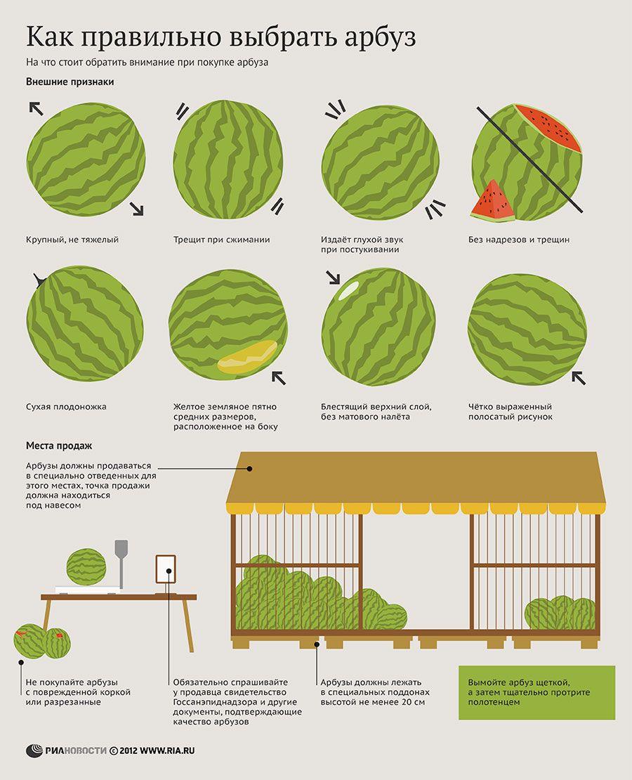 Как правильно выбрать арбуз. Инфографика | Арбуз, Полезные ...