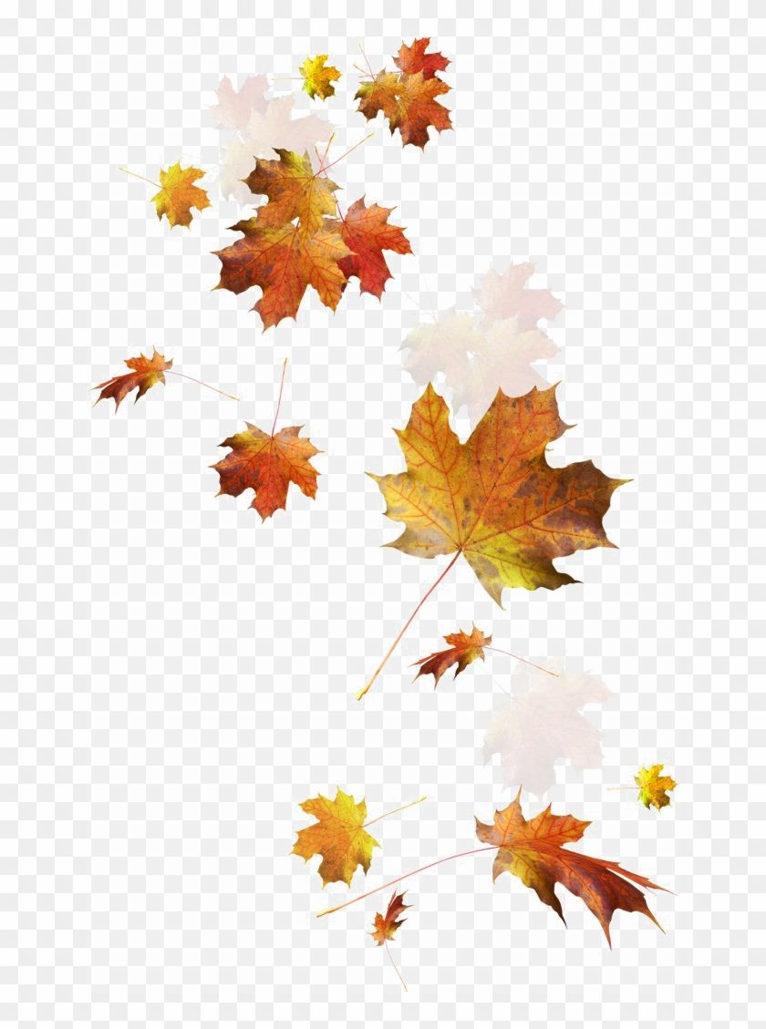 Falling Autumn Leaves Png Image Transparent Autumn Leaves Png Clipart Is Best Quality And High Re Flower Phone Wallpaper Autumn Leaf Color Flower Png Images