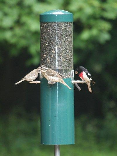 Birds Choice Feeder with Squirrel Baffle & Pole