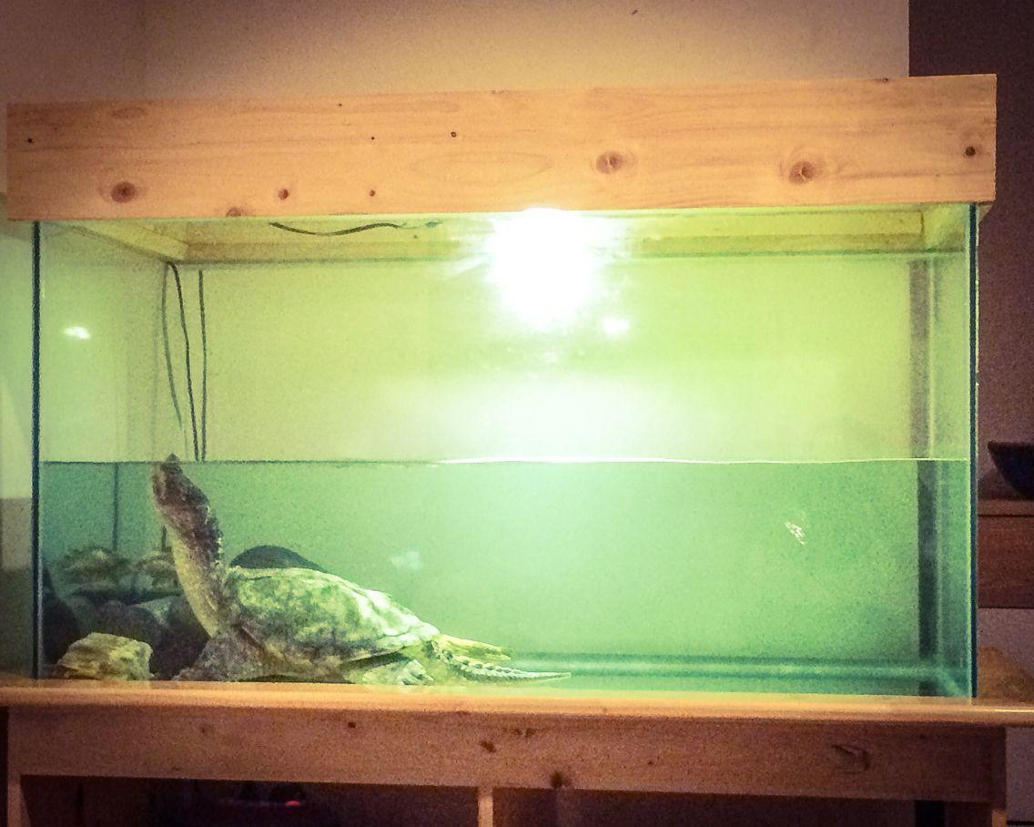 Diy project modern fish tank aquarium for common for Fish tank turtles