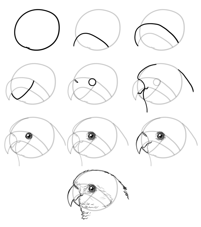 How to Draw Birds: Step by Step Instructions ...