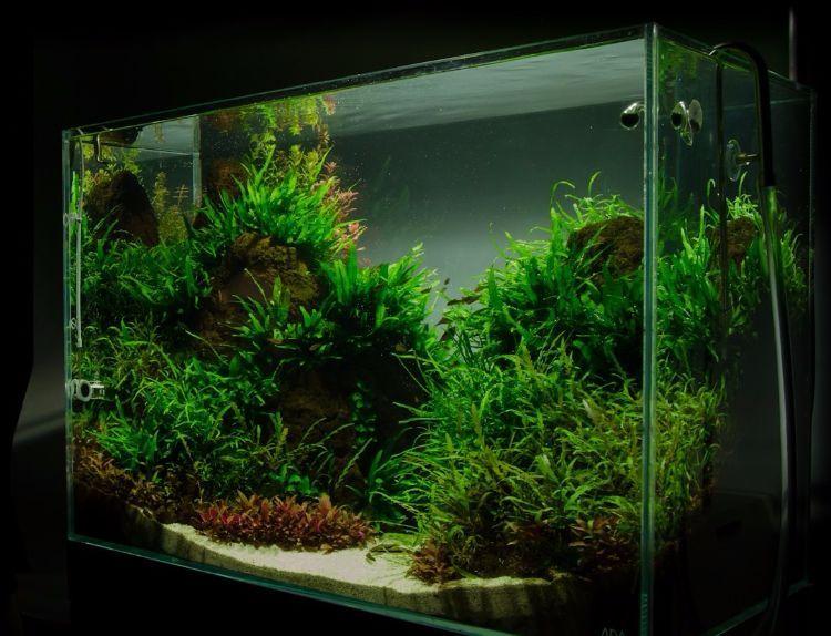 Aquarium Einrichten Beispiele 200