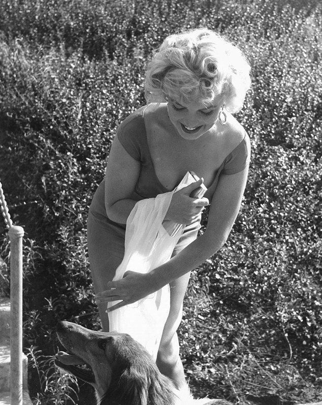 Marilyn Monroe meeting Lassie at the Ray Anthony party, 1952.