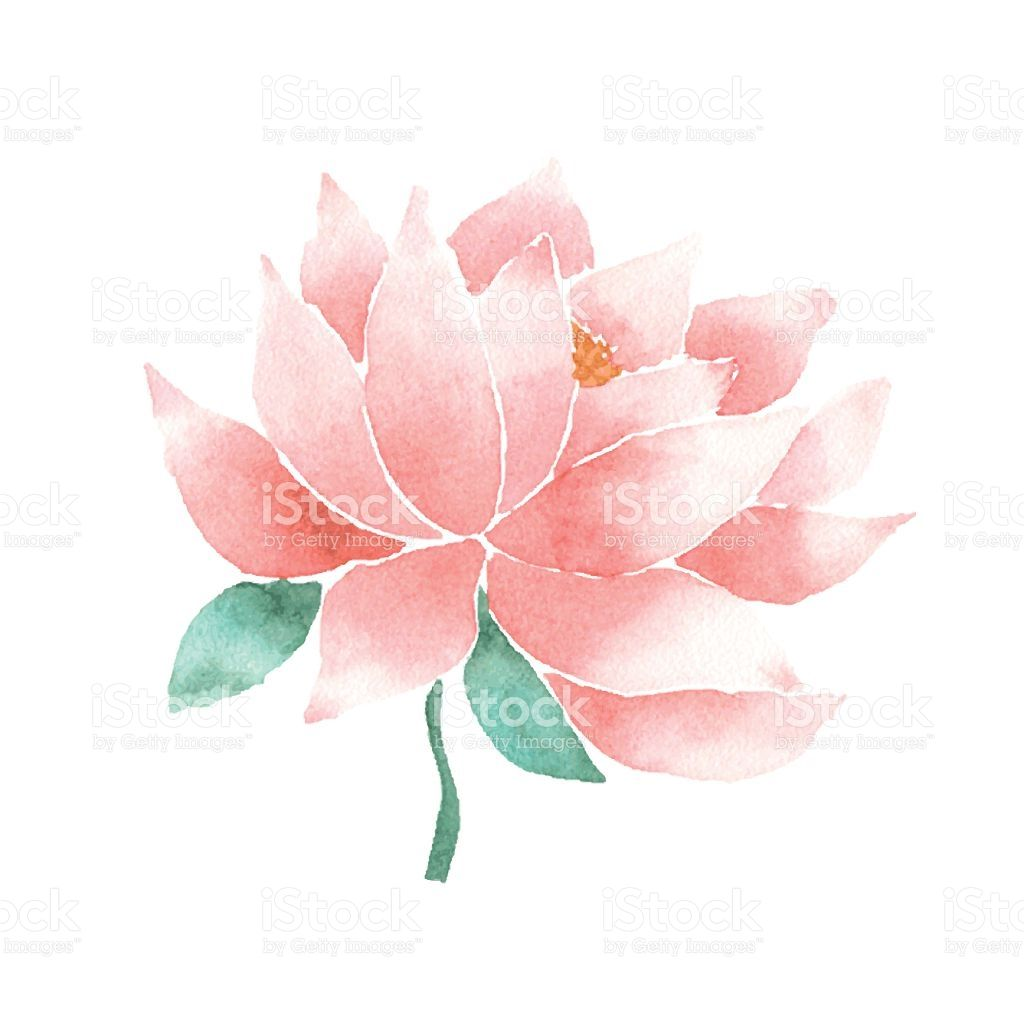 Watercolor Lotus Flower Pink Vector Painted Decorative Element 2020 蓮 イラスト 蓮の花 ハスの花