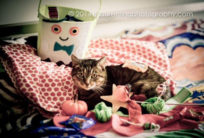 halloween kitty, halloween, cat costume, halloween cat, candy