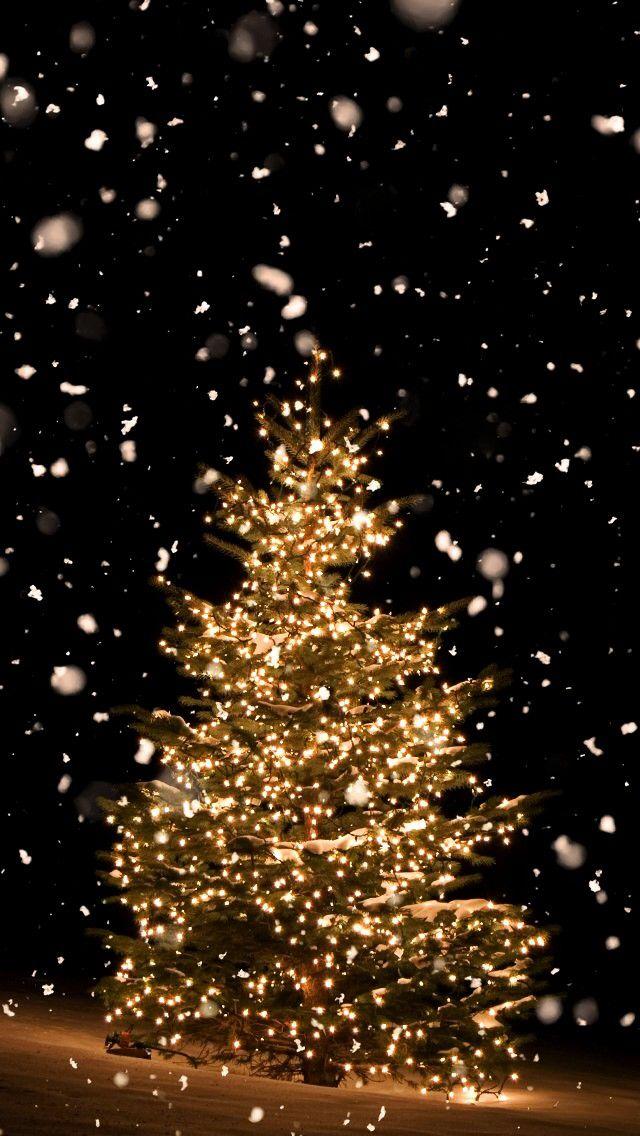 iPhone holidays winterchristmas tree sunflowerchristmastree Wallpaper iPhone Wallpaper iPhone holidays winterchristmas tree sunflowerchristmastree Wallpaper iPhone Sfsf G...