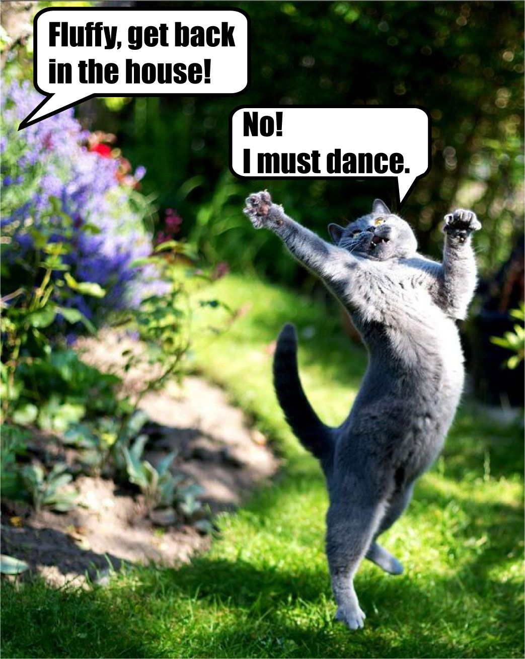 i must dance! meme cat lolcat Animal Memes