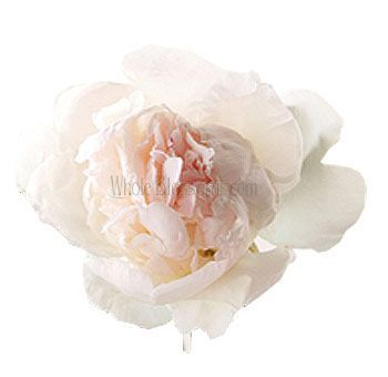 Order Peony Blush Flowers For Wedding More Fresh Cut Online With Free Delivery On Whole