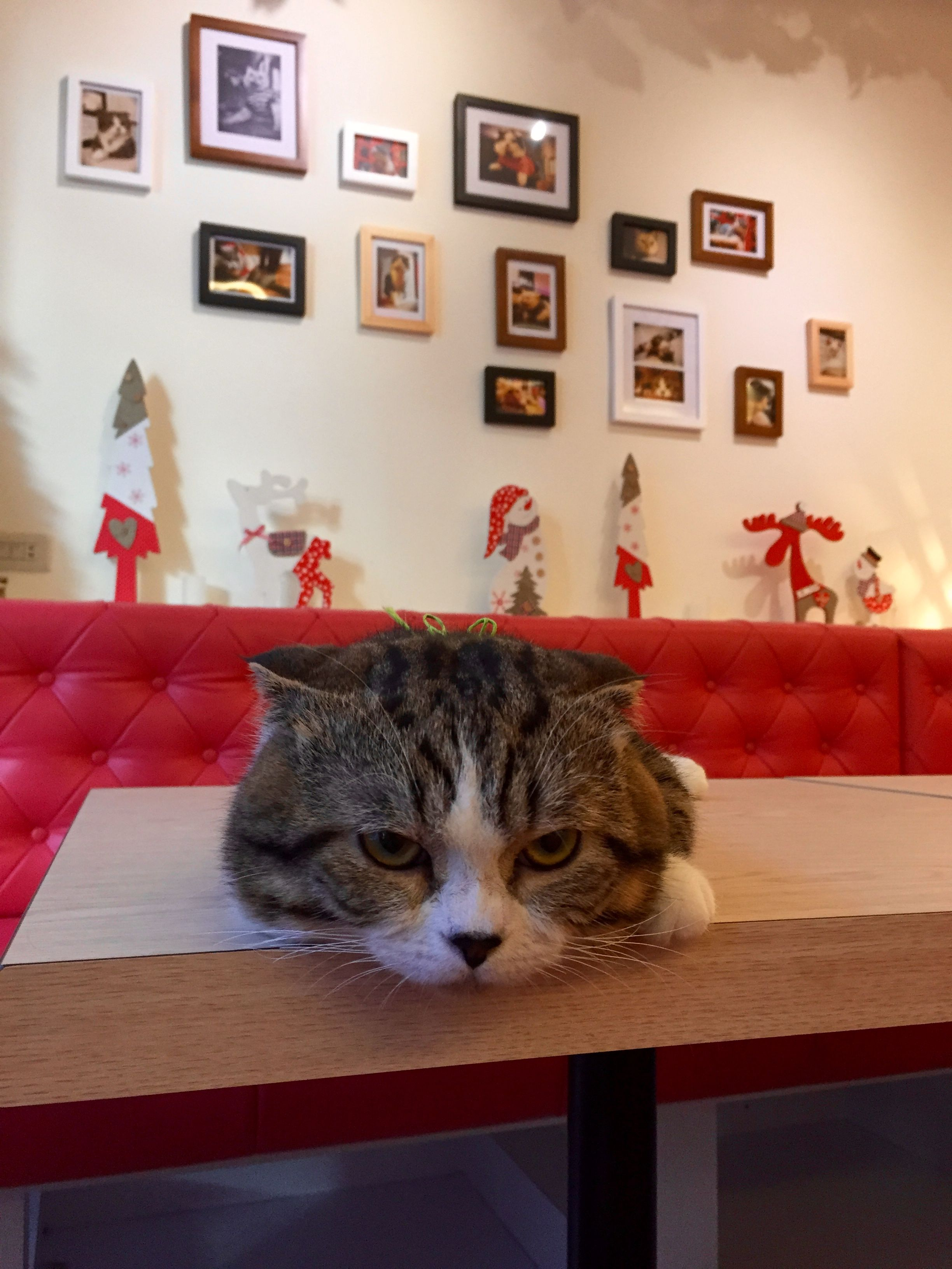 Lunch in the Cat Cafe, Taichung, Taiwan Taichung, Asia