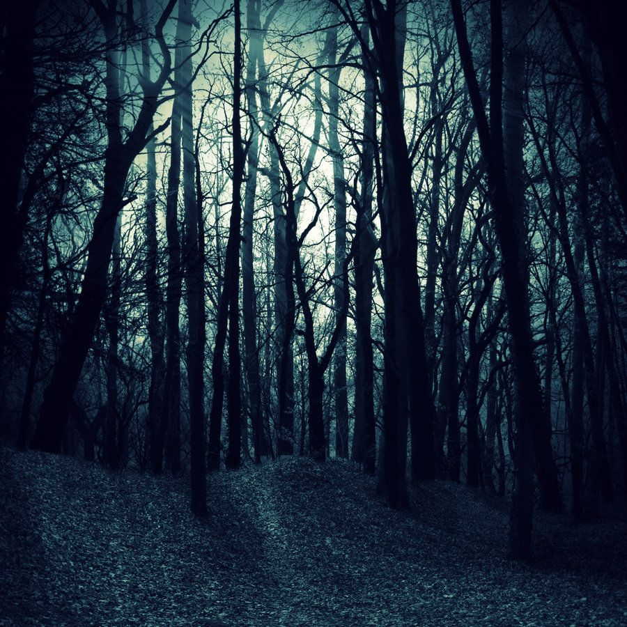 Woods Wallpapers Wallpapersafari Dark Wood Background Scary Woods Picture Backdrops