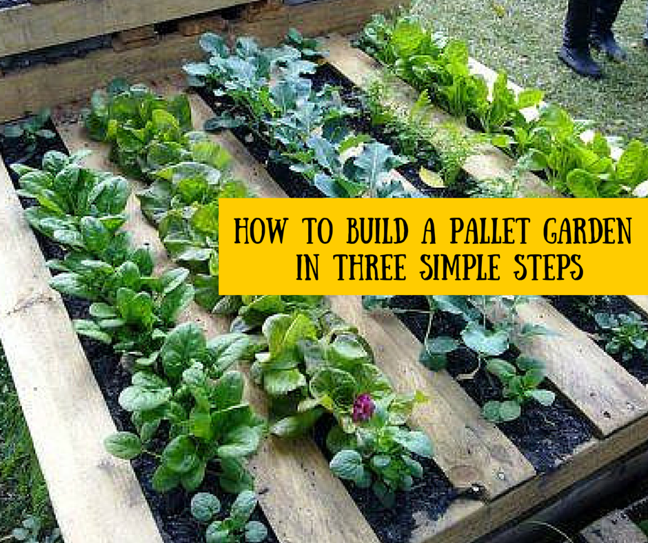 How to build a pallet garden in three simple steps the for Fun vegetable garden ideas