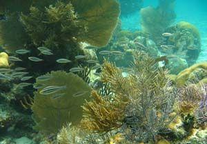 Diving in Madagascar - Nosy Be Diving Association members list & dive site descriptions