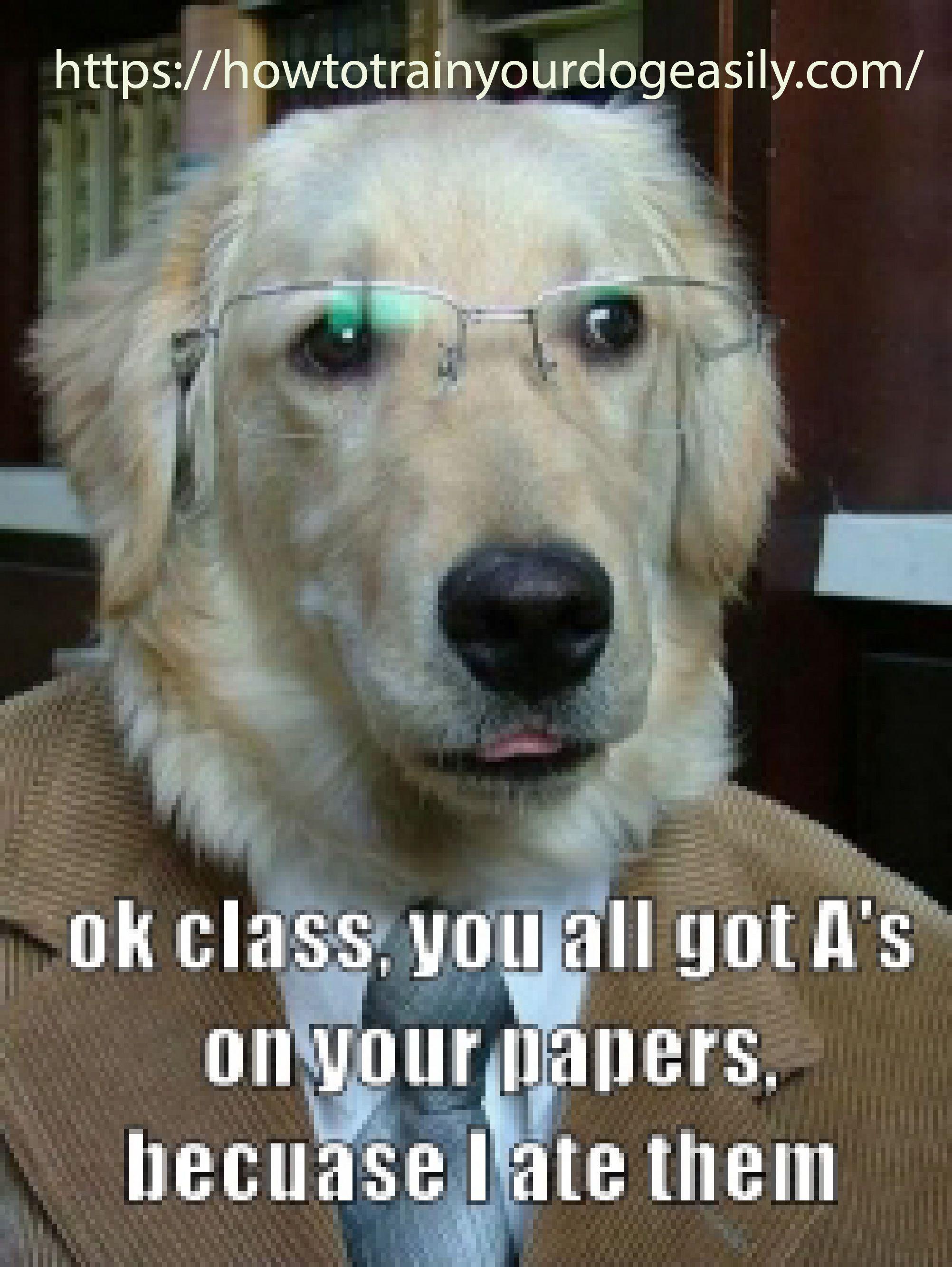 Dog Behaviorist Funny Dog Memes Funny Dogs Dog Quotes Funny