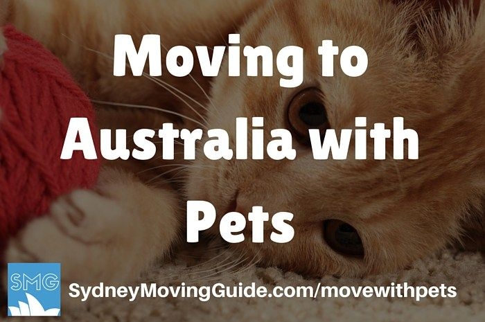 Moving To Australia With Pets Sydney Moving Guide Moving To Australia Australia Pets