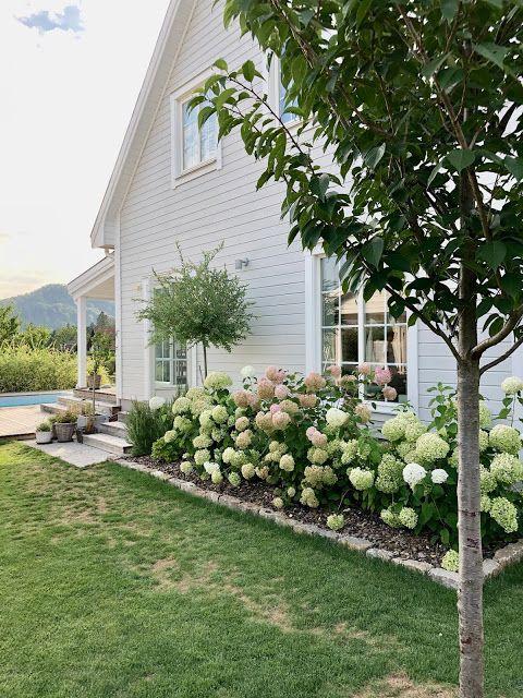 Hortensien-Pracht im Garten
