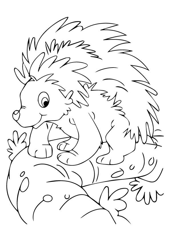 nocturnal animals coloring pages - print coloring image porcupines books crafts decor