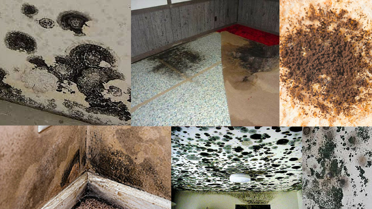 What Is The Difference Between Mold And Mildew