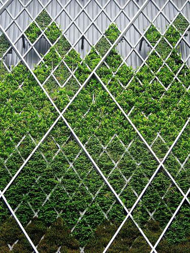 Vertical Garden Green Facade Green Architecture Garden Architecture
