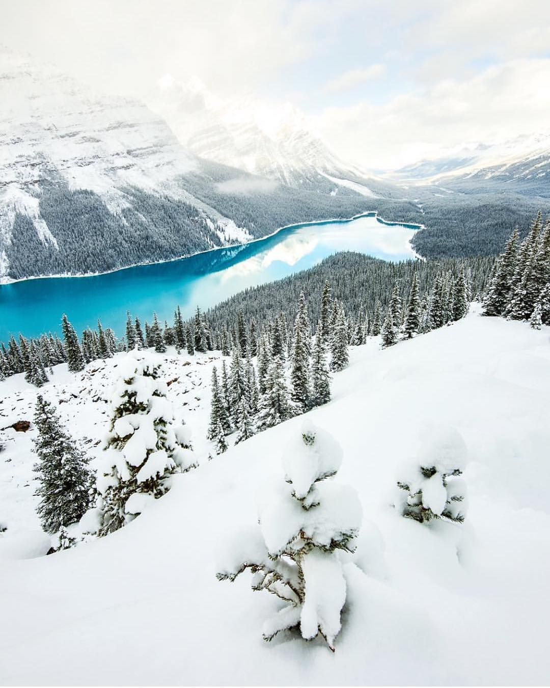 """""""Winter in Peyto Lake - Canada ✨❄️❄️✨ Picture by ✨✨@CalSnape✨✨ Good morning """""""