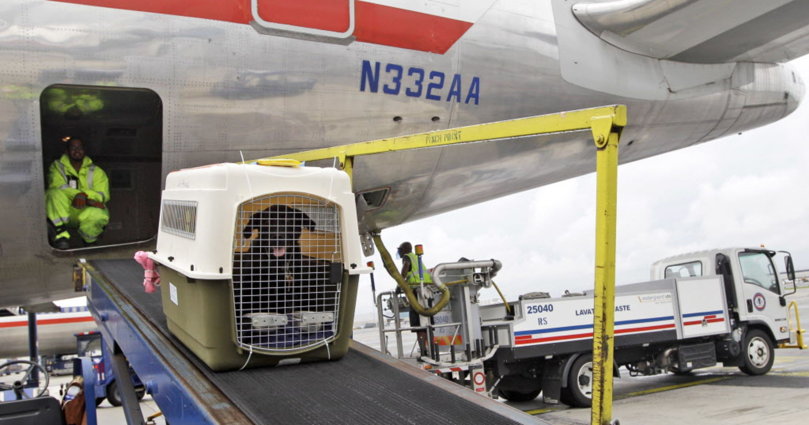 Flying can be dangerous for your pets. Could this help