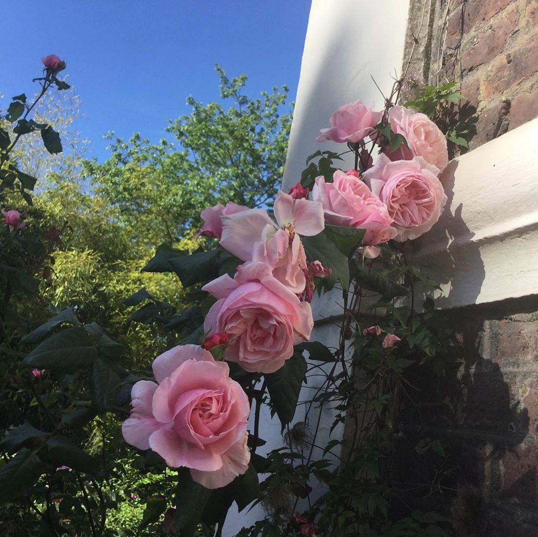 Gib Den Rosen Ein Wenig Wasser Und Sie Danken Es Dieses Jahr Mit Einer Zauberhaften Blutenfulle Heilmannshof Traar Kr Gartenbau Garten Offene Gartenpforte