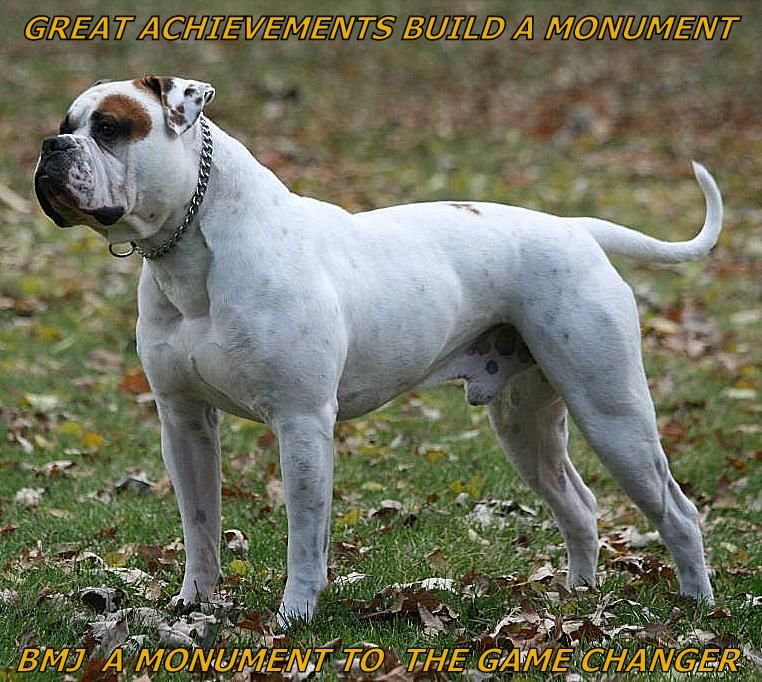 Braveheart Homestead Com Rage Html American Bulldog American Bulldog Scott Bully Dog