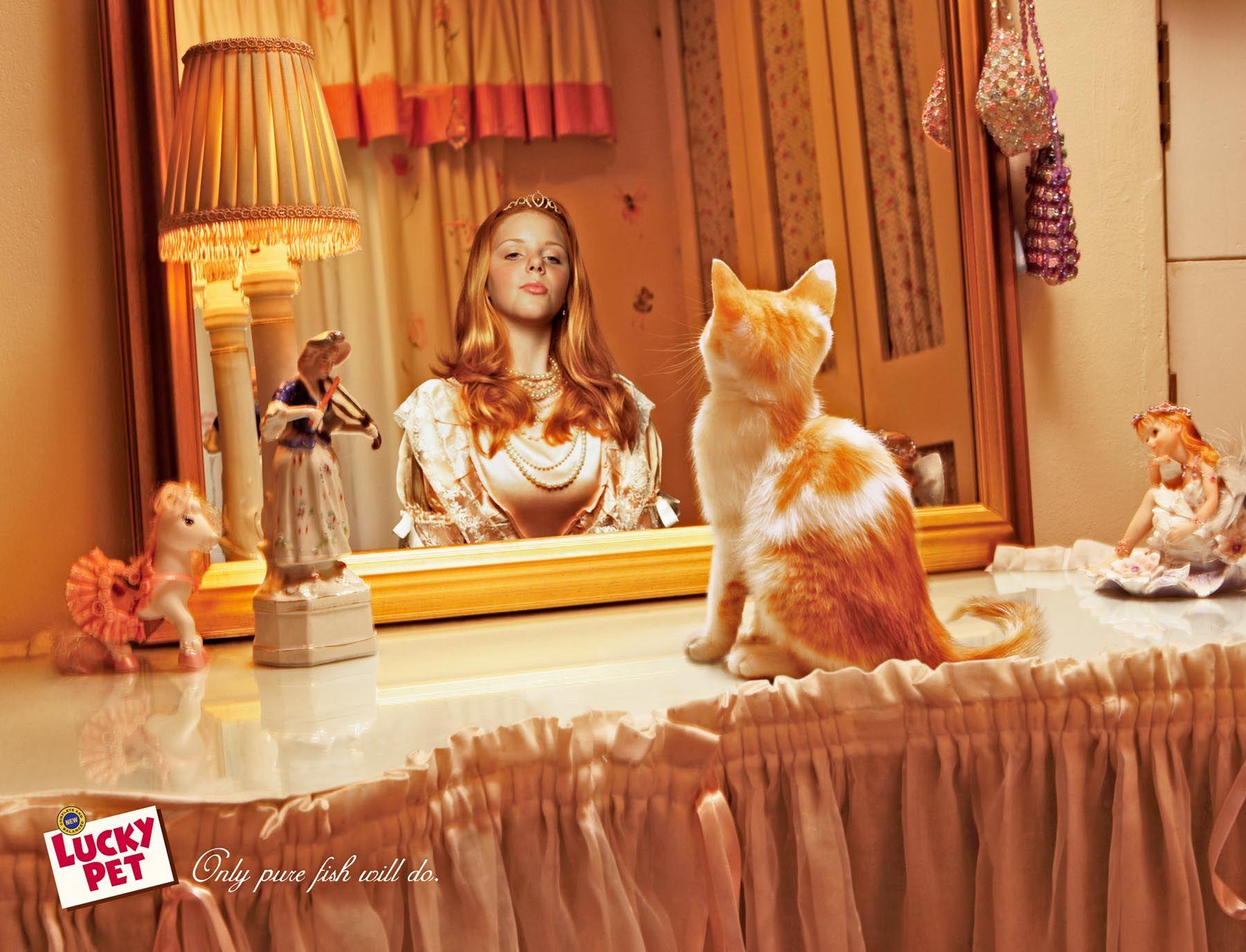 рекомендую картинки кошка в зеркале невесты всегда