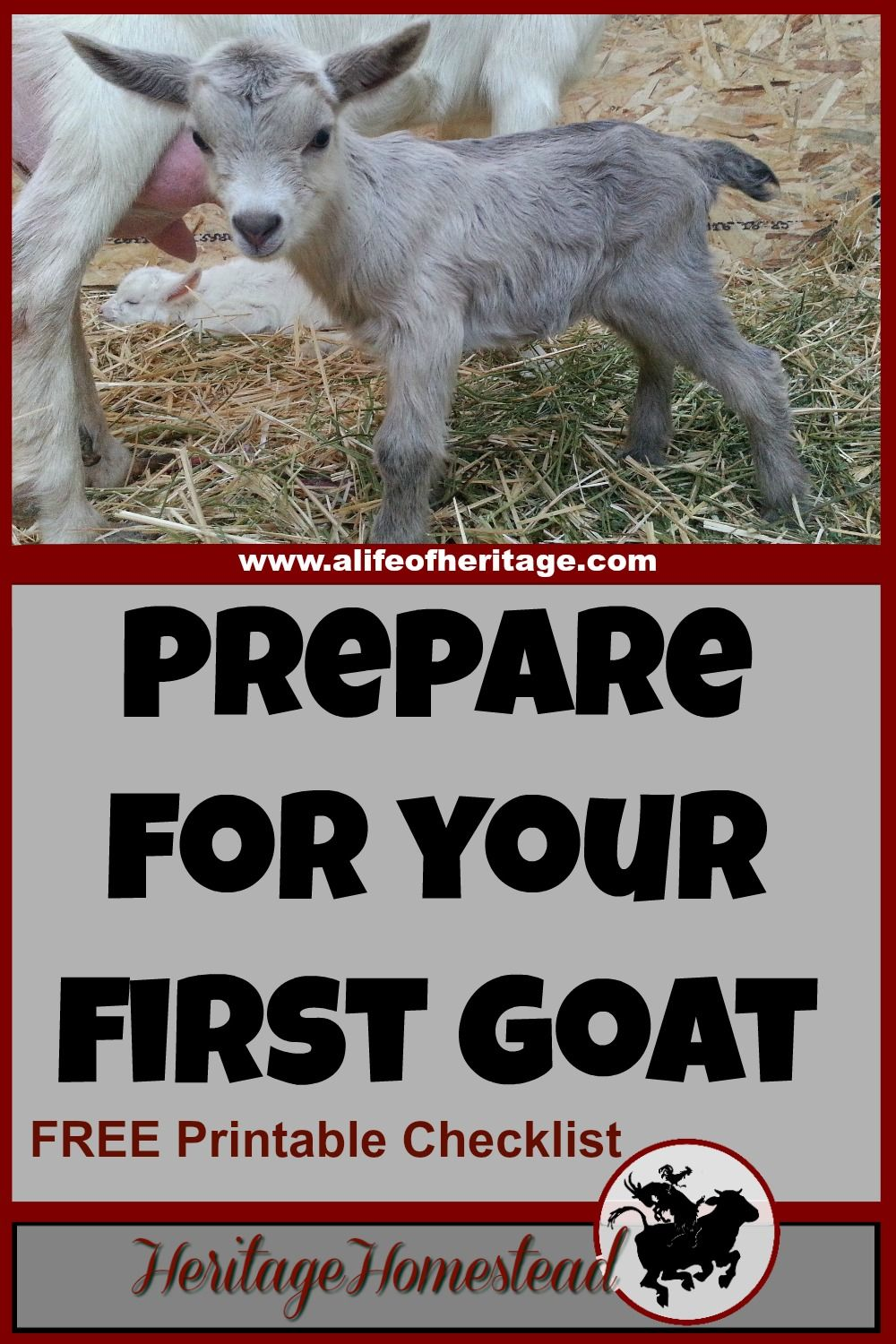 What You Need BEFORE Bringing Home Your First Goat