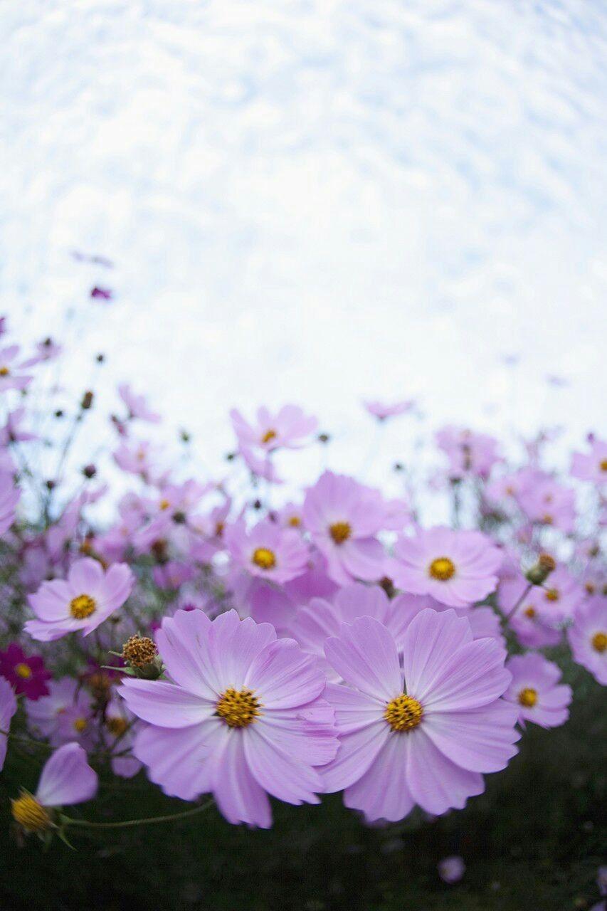 ورد بنفسجي Flower Iphone Wallpaper Iphone Wallpaper Images Cute Bedroom Decor