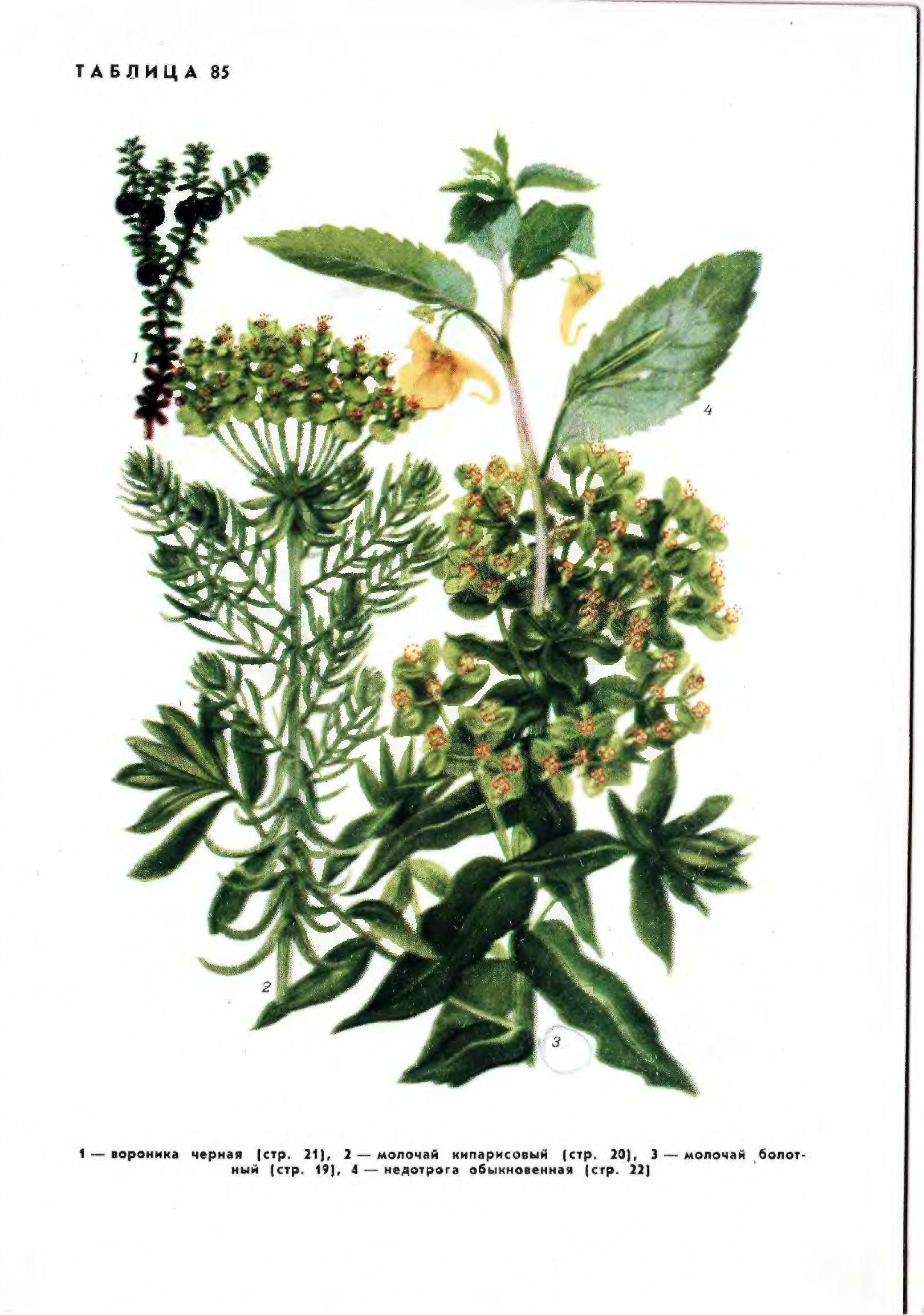 Травянистые растения СССР / Алексеев и др., 1971, в 2-х тт., 448+310 с.