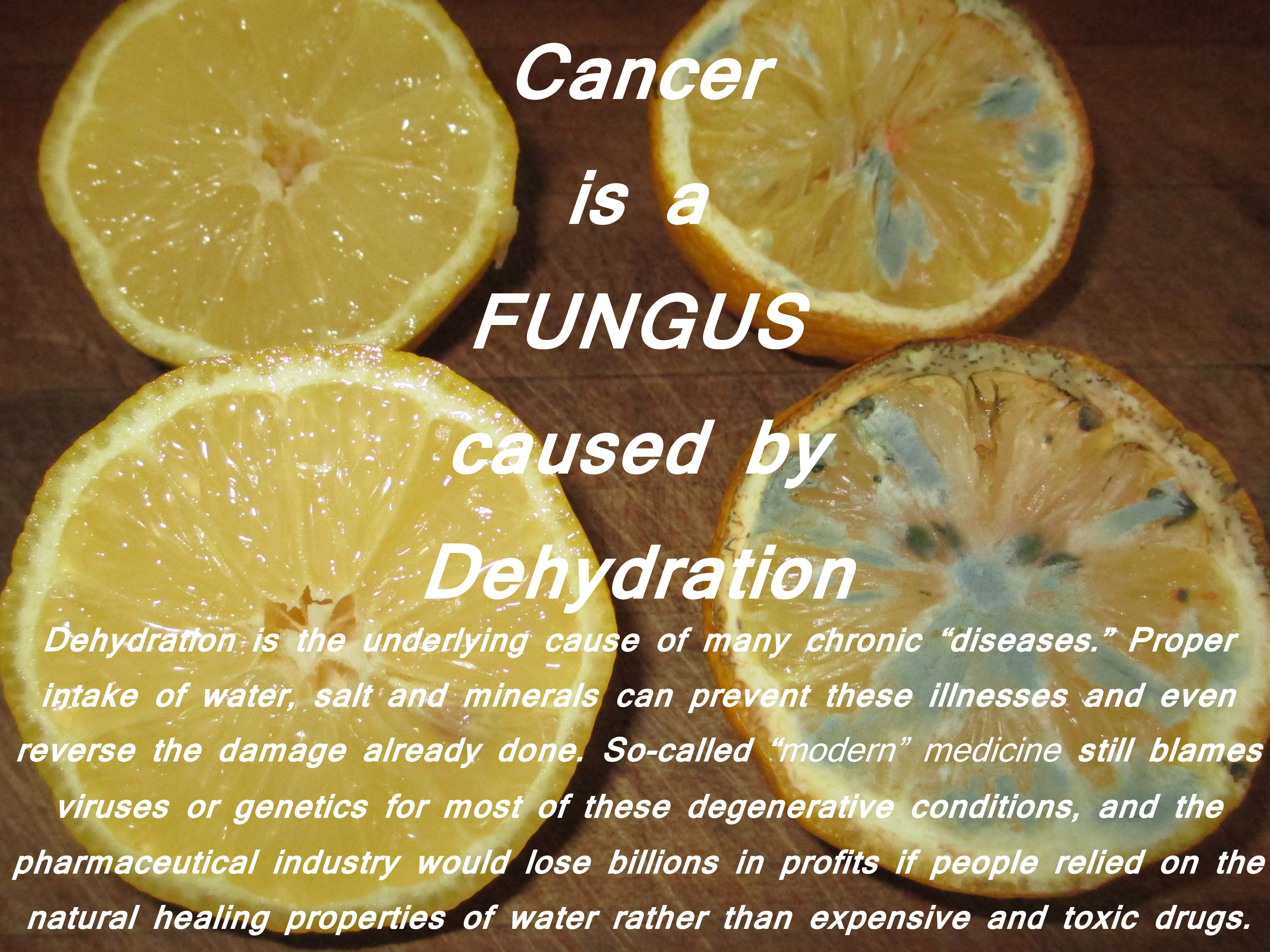 I believe fungus is the root cause of all disease: I feel man – made