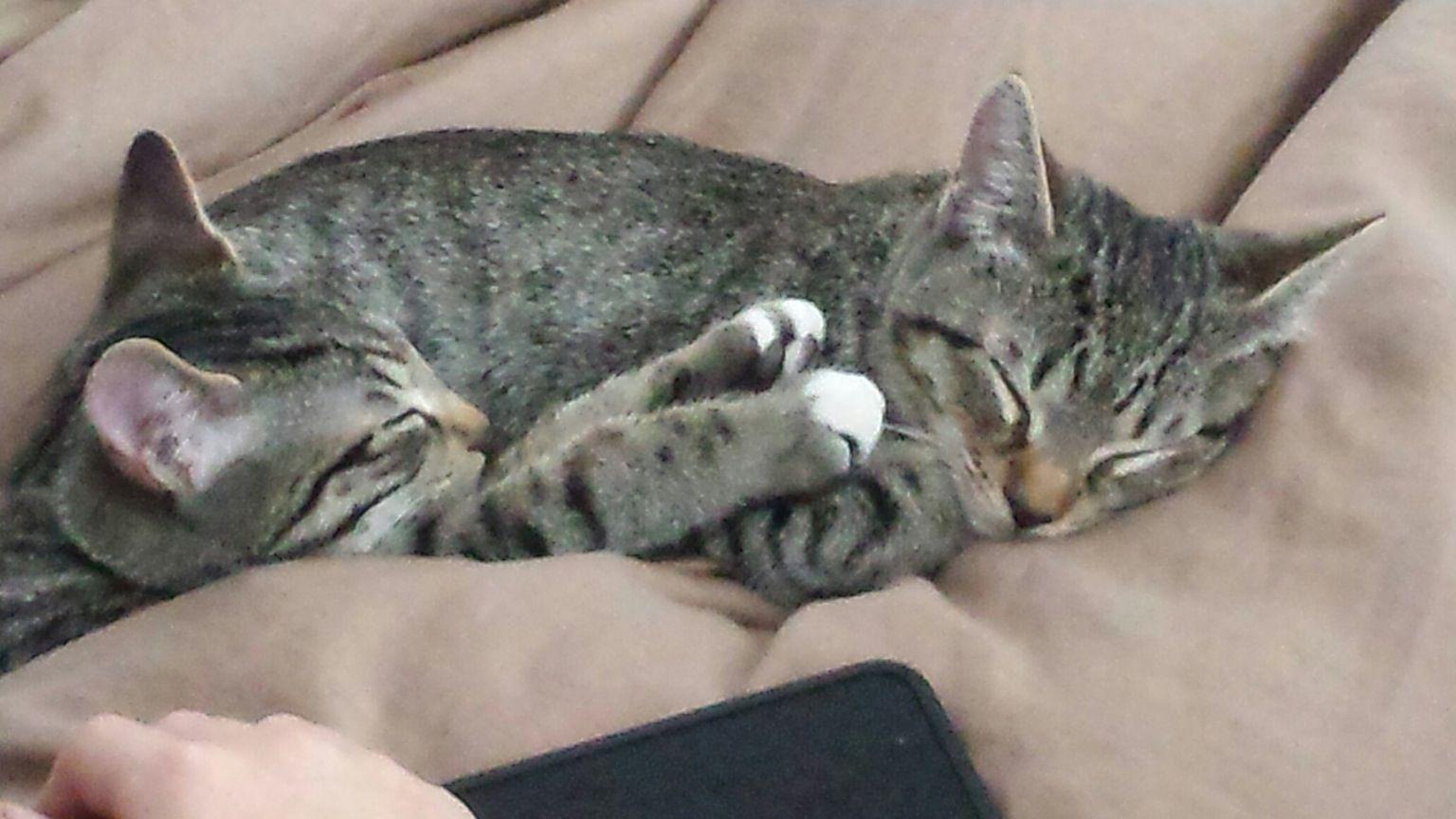 Sleeping Peacefully http://ift.tt/2h6PR4p
