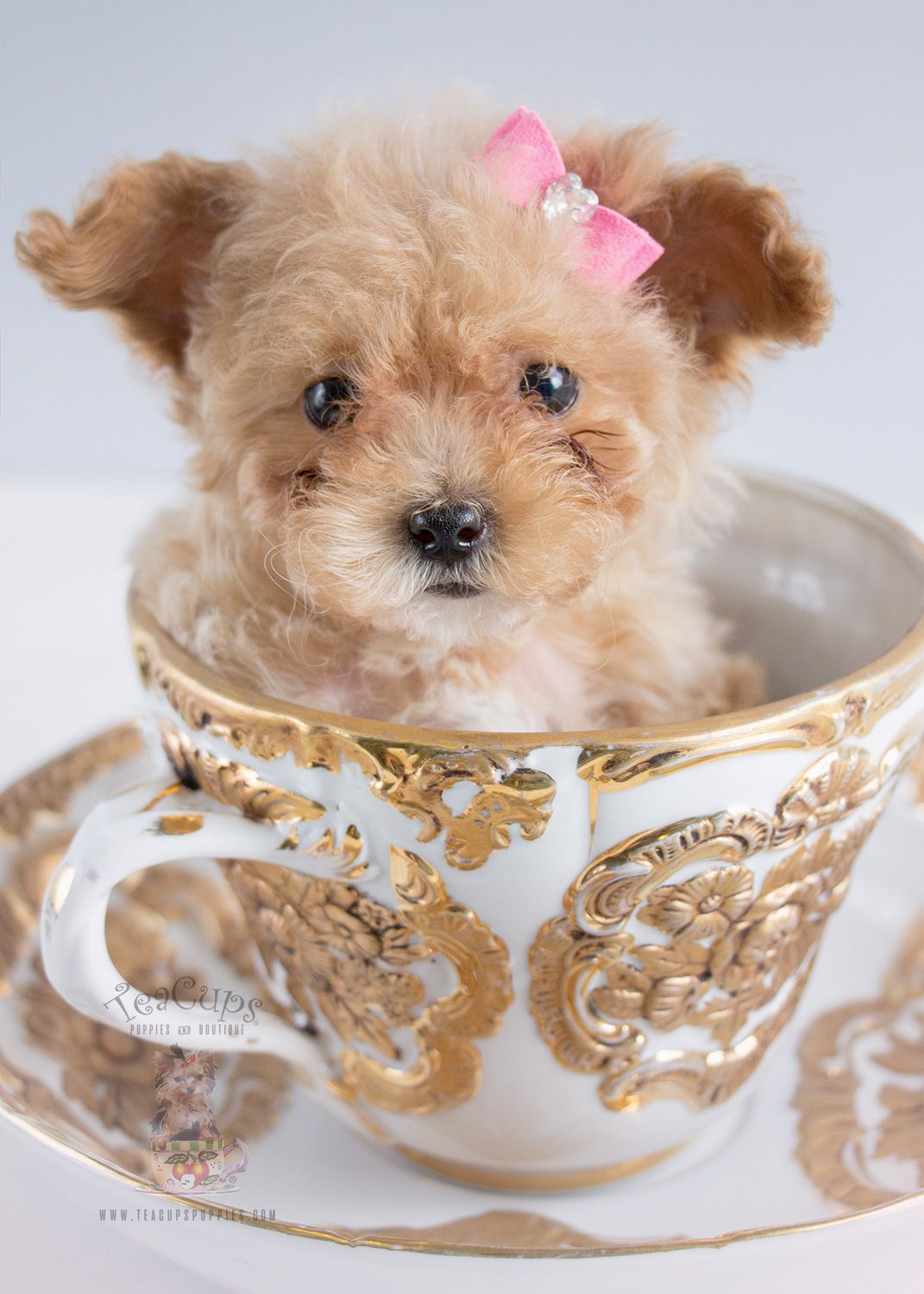 Treat Your Pet Right With These Dog Care Tips Teacup