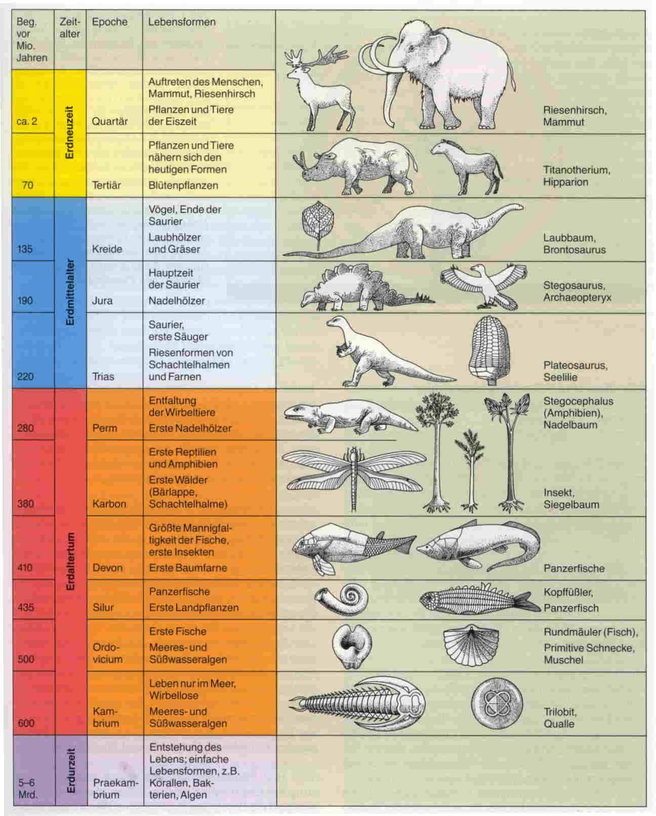fossilien zeittafel Google Search