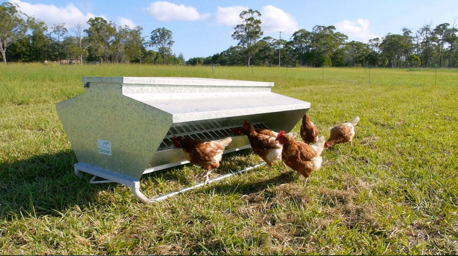 Pin By Chicken Caravan On Our Products Laying Hens Free