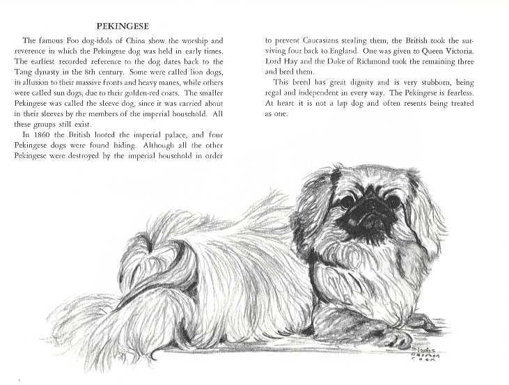 Pekingese Book With Sketch Pekingese Pekingese Dogs Dog Print