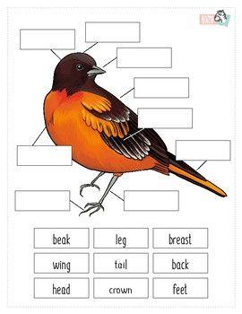 Bird Anatomy Worksheet | Birds, Funny birds, Bird nests art