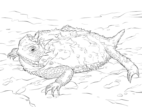 Realistic Texas Horned Lizard Coloring Page Free Printable Coloring Pages Horned Lizard Animal Coloring Pages Coloring Pages